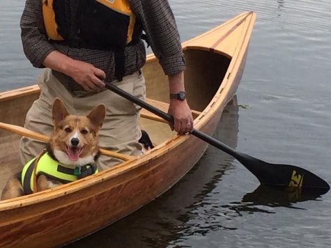 North Carolina pet friendly hotels - dog on the water