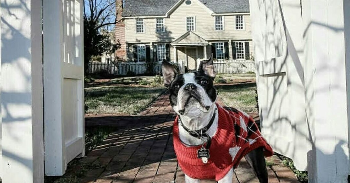 North Carolina pet friendly hotels - dog at historic sites