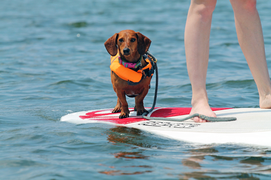 North Carolina pet friendly hotels - dog on paddleboard