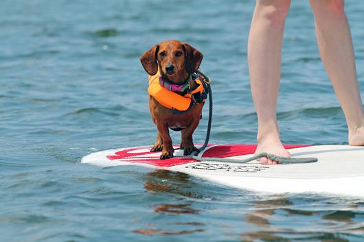 North Carolina pet friendly hotels - dog on paddleboard