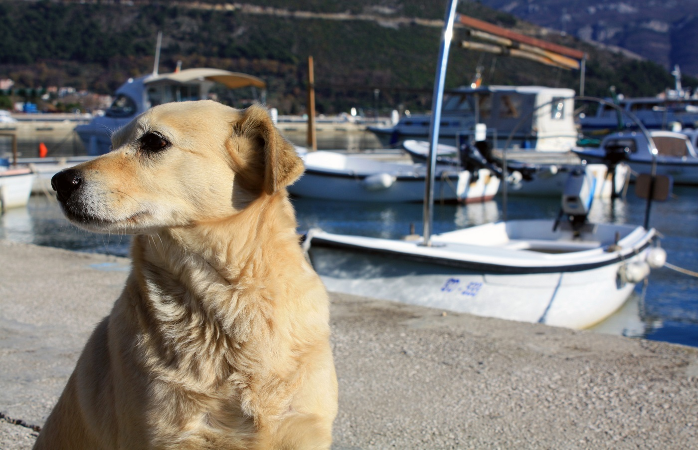 North Carolina pet friendly hotels - Dog at the dock